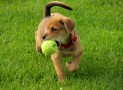 Training Your Dog to Fetch a Ball: Playing Catch Can Be Fun