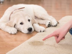 How to House Train Your Dog and Achieve the Best Results