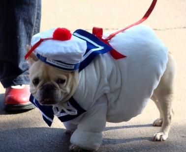 Are Dog Clothes Really Necessary?