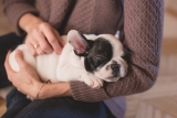 Best Holiday Gift Guide for Puppies – Christmas 2018