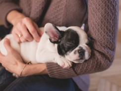 Best Holiday Gift Guide for Puppies – Christmas 2016