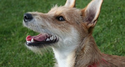 A Comprehensive Insight Into Canine Teeth Cleaning