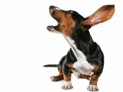 Dog Barking Problem – 5 Easy Tips to Stop your Dog from Barking!