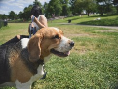 5 Off Leash Dog Park Rules and Regulations to Always Follow