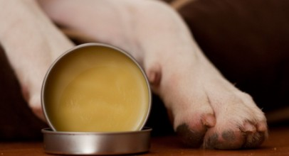 Paw Wax for Dogs – Prepare for the Harsh Winter