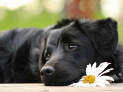 Dog Food Ingredients for a Healthy Coat