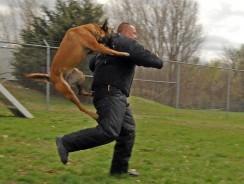 Tips on Dog Pet Training – Bark and Bite Training