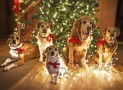 Dogs and Christmas Trees – What to Watch Out For!
