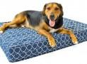 ELuxury Supply Orthopedic Dog Bed Review