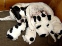 How To Make Your Dog Gain Weight After Birth