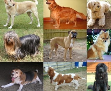 How to pick a dog and what you should look for!