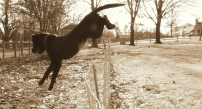 Are Electric Fences Safe for Dogs?