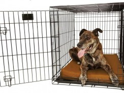 Orthopedic 4″ Dog Crate Pad by Big Barker Review