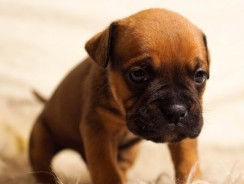 How to Stop a Puppy from Whining in the Crate