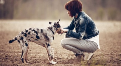 Healthy Dog Training Treats – What you Need to Know to Keep your Pet Safe