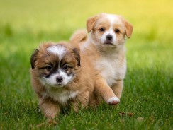 The 411 on Owning Multiple Dogs