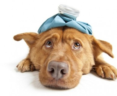 The Most Common Dog Health Problems And How You Can Prevent Them