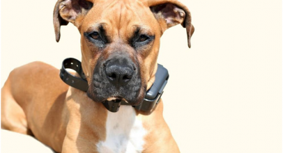 Should You Use Shock Collars for Dog Training?