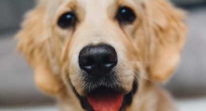 5 Great Dog Organizations to Donate to!