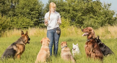 Obedience Training for Dogs – What You Should Know to Do Things Right the First Time