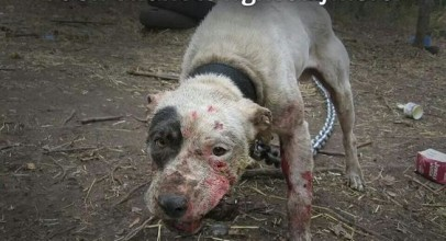 Say No to Dog Fighting