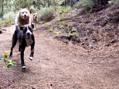 Top 10 Dogs for Runners