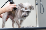 Best Dog Clippers Reviews