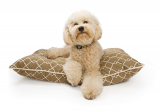 Serta Dog Bed Review