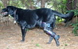 What to Expect when Your Dog Faces ACL Surgery