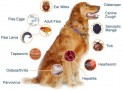 Common Dog Illnesses