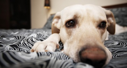 Pet Guide: Separation Anxiety in Dogs