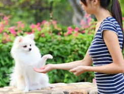 Does Your Dog Respect You?