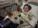 Epilepsy/Seizure Working Dogs