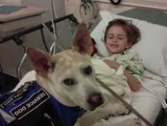 Epilepsy/Seizure Working Dogs