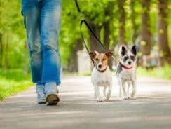 Ten Questions to Ask Your Dog Walker