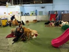 Doggy Day Care: Daycares Aren't Just for Kids Anymore
