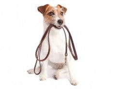 How to Prepare for a Dog Walk