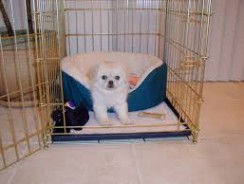 Crate Training Your New Dog