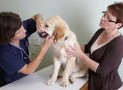 Dental Care for Your Dogs