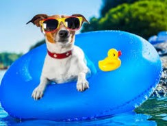 Keep Your Dog Happy in the Dog Days of Summer