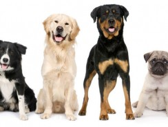 How to Pick the Right Dog for You