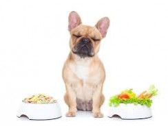 Benefits of a Dog Diet: Diagnosing and Treating Obesity in Dogs