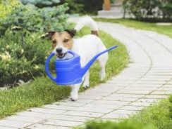 Can a Dog and a Garden Go Together
