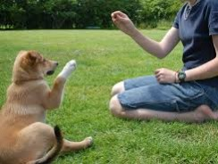 How to Train Your Dog as a Novice Trainer