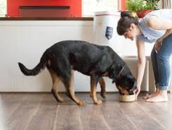 Ten Items Every Dog Owner Needs