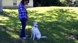 Heeling with a Deaf and Blind Dog