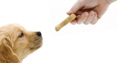 High Quality Dog Treats