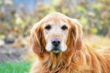 Tips for the Care of Aging Dogs