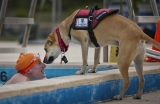 Assistance Dogs: What You Need to Know
