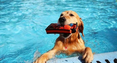 How to Keep Your Dog Safe from Summer Health Hazards